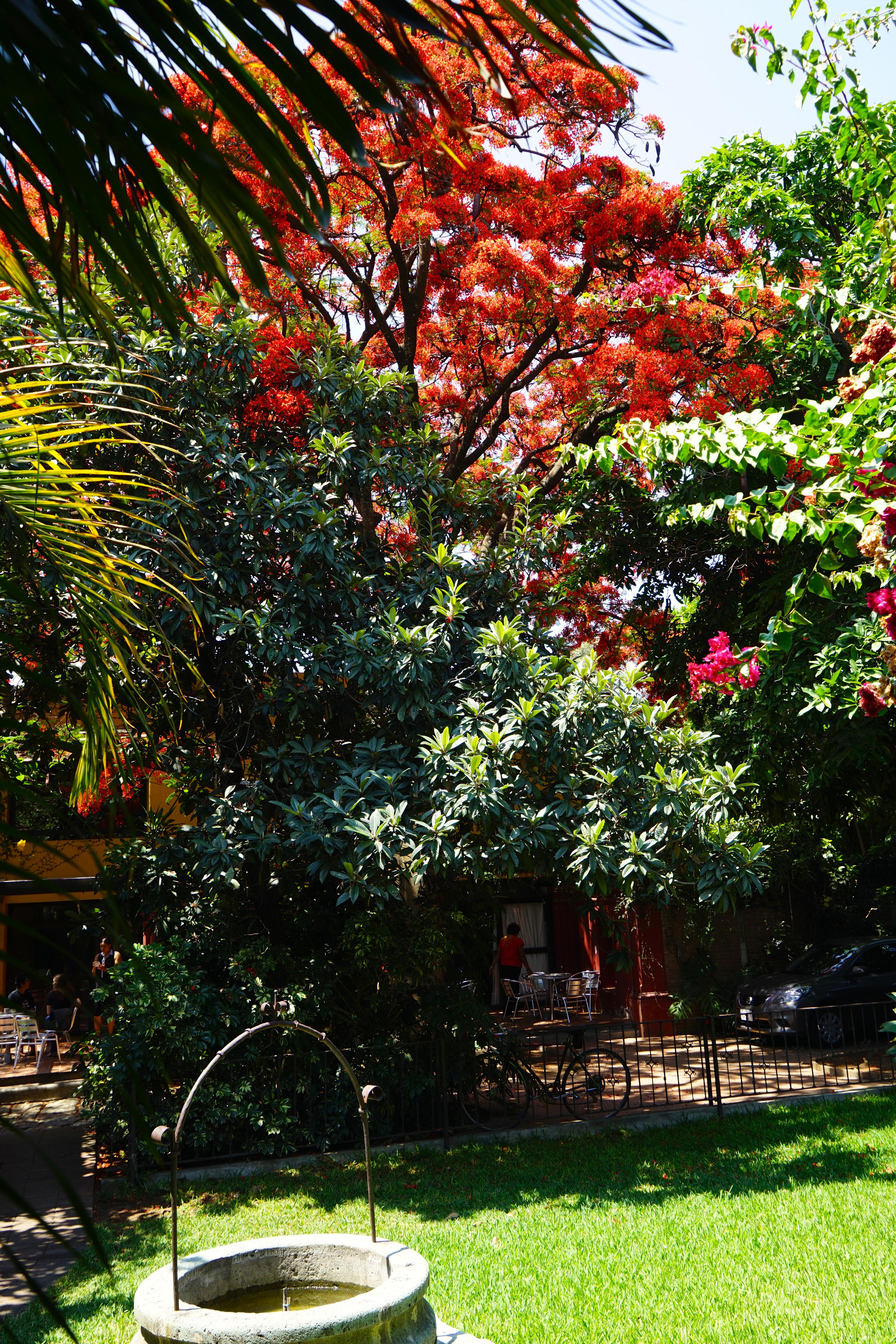 A hacienda's yard